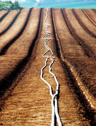 שטחים ירוקים בין רעננה לגבעת חן אפריל 09 – ביגל רונית