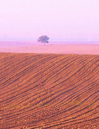 שדה פלחה באור הזריחה – דודי קורן