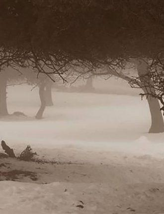 יער אודם המושלג – כהן ערן