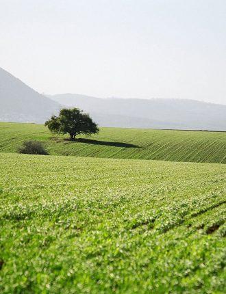 כעץ השדה – אדוה ביטון שטיין
