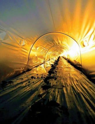 כשהשמש מתחברת לאדמה - דורון ליבנה