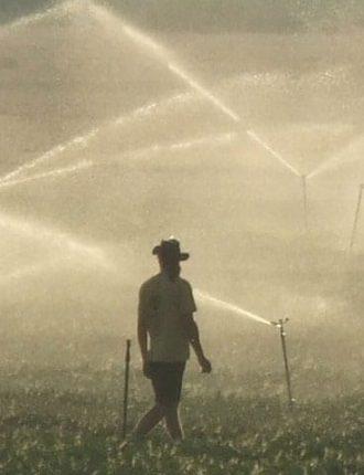 בשדות עמק חרוד באבטיח לגרעינים – עופר רענן