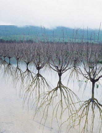 האגם המוצף – צבי פינקלשטיין