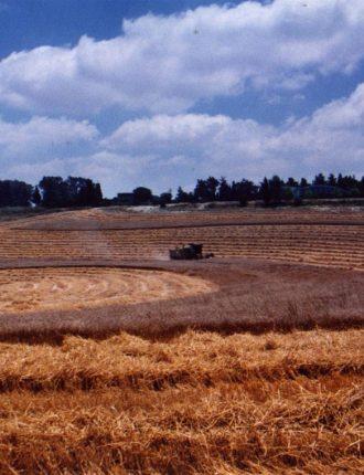 קומבין בשדה צפוני – בתיה רזניק
