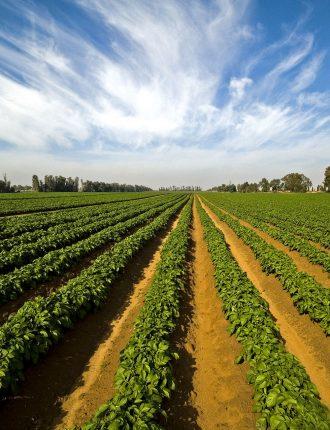 שטח תפוח חוות שלח משאבי שדה – דב קלעי