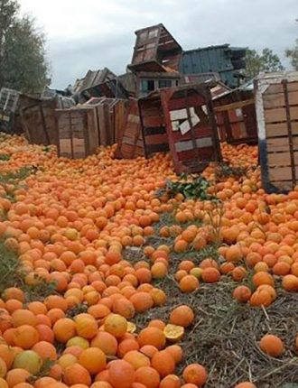 תפוזים – שפרר גד