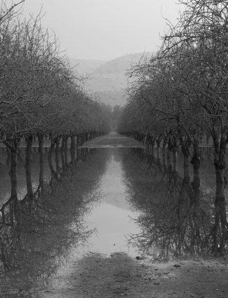 שורשי מים – ענת זיסוביץ