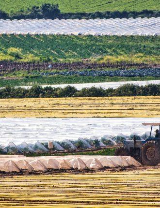 אמנות חקלאית – איגור חונין